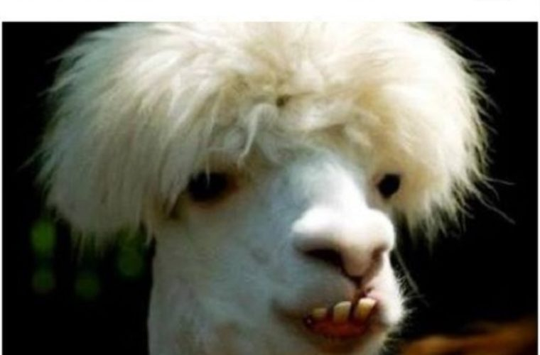 Bad Hair Day Funny Pictures Quotes Memes Funny Images Funny
