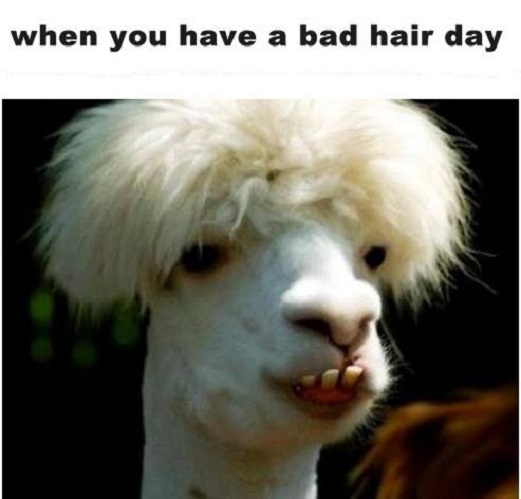 Funny Bad Hair Day Pictures to Pin on Pinterest - PinsDaddy
