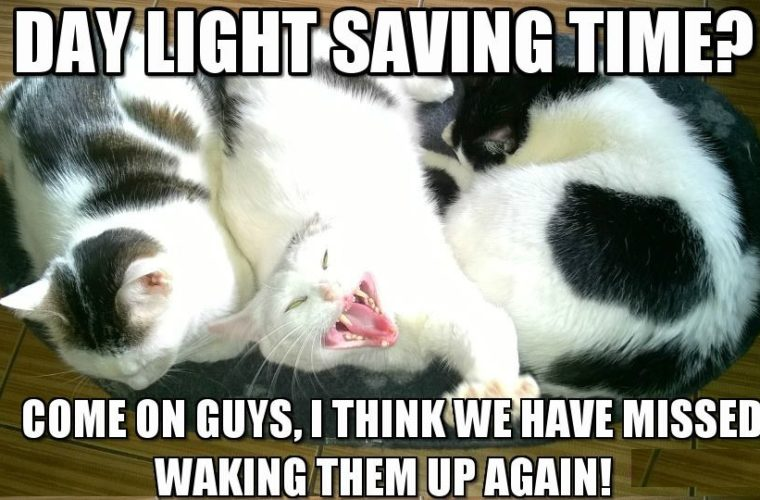 Day Light Saving Time