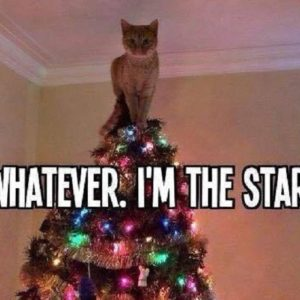 I'm The Star