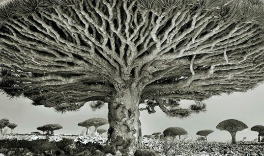 Photographing the World's Oldest Trees