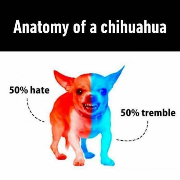 Anatomy Of A Chihuahua Funny Pictures Quotes Memes Funny Images