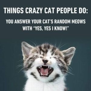 Crazy Cat People Do