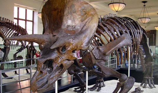 Discover Dinosaurs: Five Surprising Facts