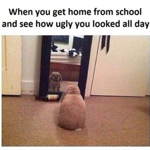 Get Home From School