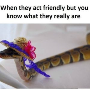 They Act Friendly