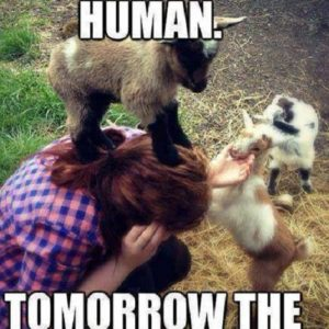 Today The Human
