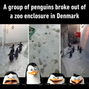 A Group Of Penguins