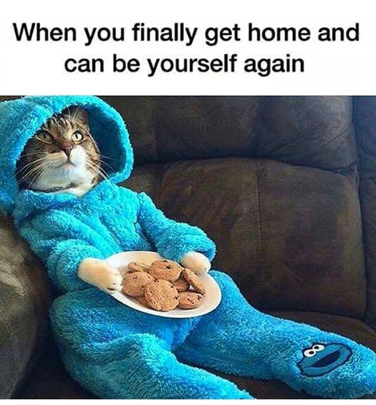 Finally Got Home Funny Pictures Quotes Memes Funny Images