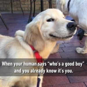 Good Boy Is My Name