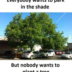 Park In The Shade