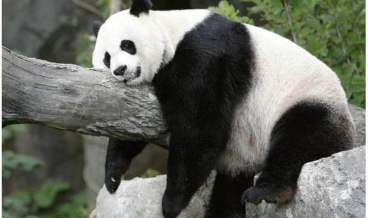 I Want To Be A Panda