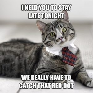 If You Had a Cat Boss