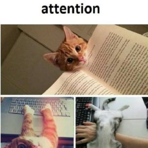 Need Attention