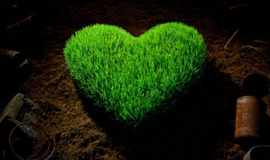 Grow Love: The best seeds on earth are the seeds of Love