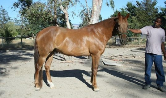 Things to Know About the Impressive Horse Syndrome