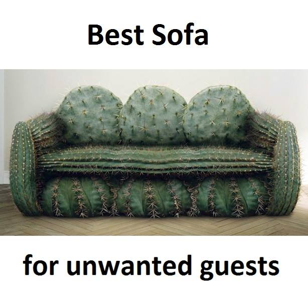Best Sofa Funny Pictures Quotes Memes Funny Images