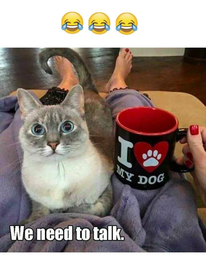 I Love My Dog i love my dog funny pictures, quotes, memes, funny images, funny