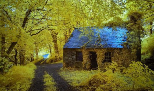 Ancient Forest Cottage in Stradbally Ireland