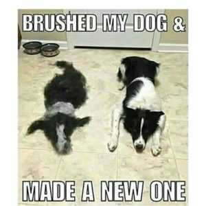 Brushed My Dog