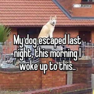My Dog Escaped