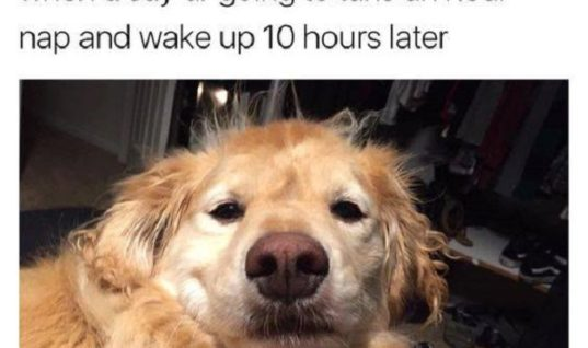 One Hour Nap