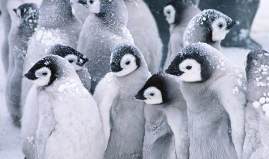 30 Facts to Know about Penguins