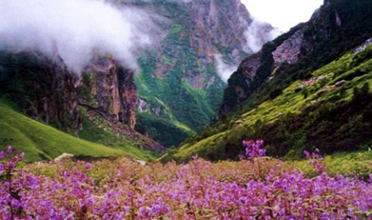 Valley of Flowers: a Paradise