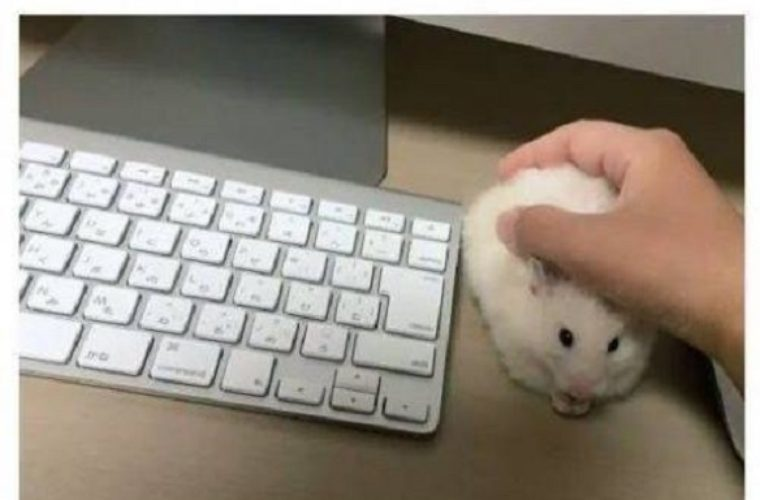 Mouse Funny Pictures Quotes Memes Funny Images Funny Jokes Funny Photos