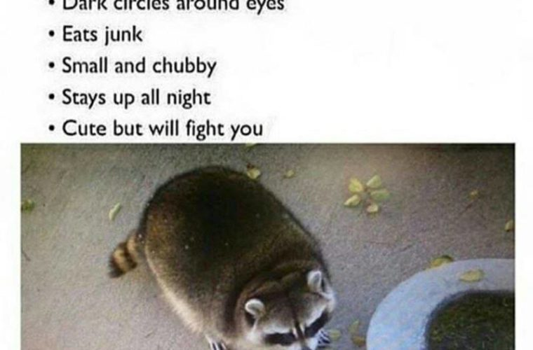 Relate To A Raccoon