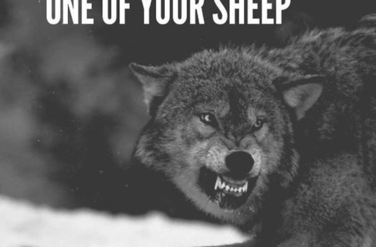 Funny Black Sheep Meme : Very funny goat meme photos and images