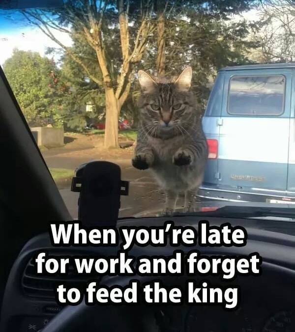 Funny Late For Work Meme : Late for work funny pictures quotes memes