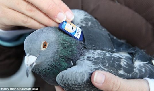 Carrier Pigeons: Delivering Messages for Centuries