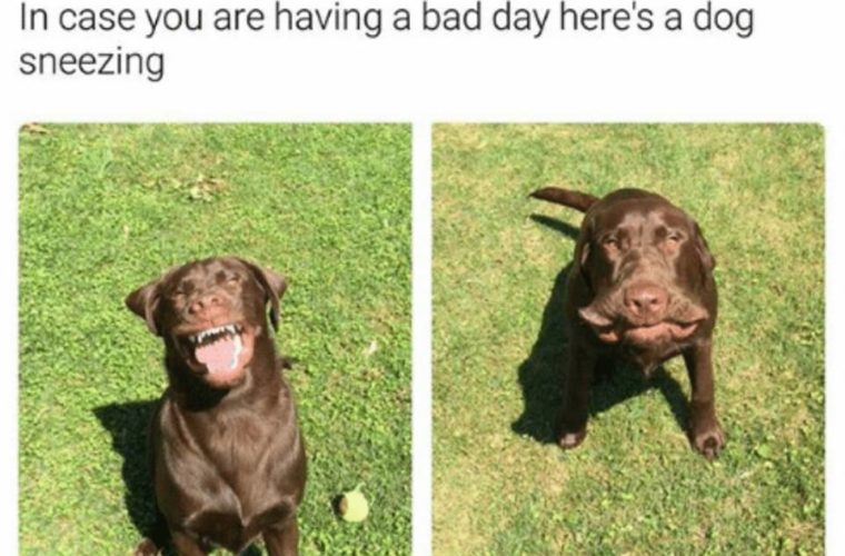 Bad Day Meme Funny : Bad day funny pictures quotes memes funny images funny jokes