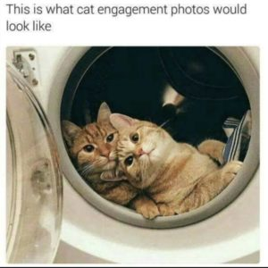 Cat Engagement