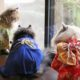 Cats Wearing Kimonos are a Trend in Japan