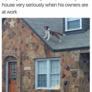Neighbours Dog