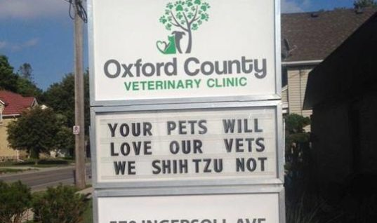 These Vets