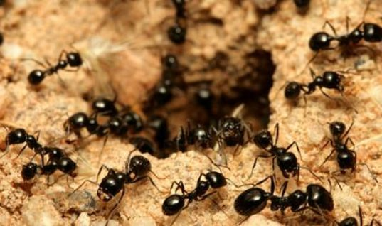 8 Fascinating Things About Ants