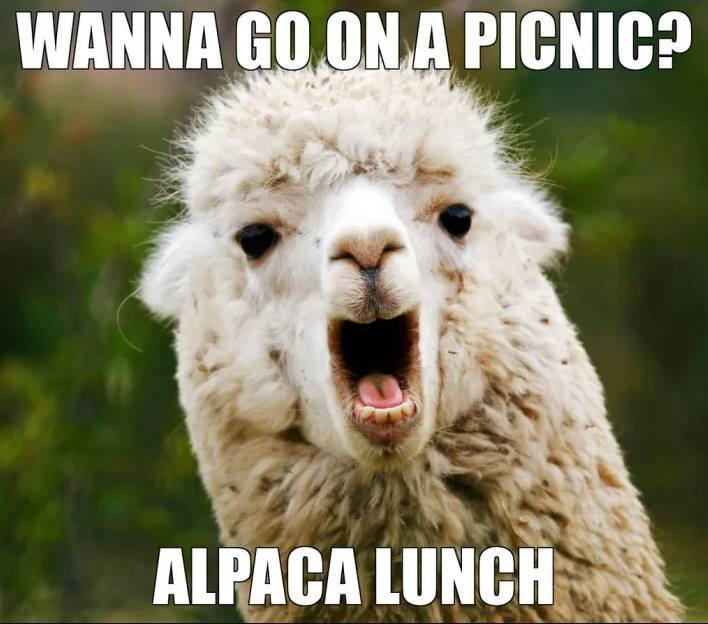 Alpaca Lunch | Funny Pictures, Quotes, Memes, Funny Images ...