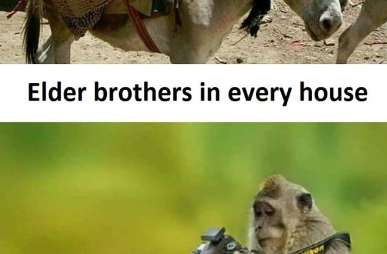 Brothers Funny Pictures Quotes Memes Funny Images Funny Jokes