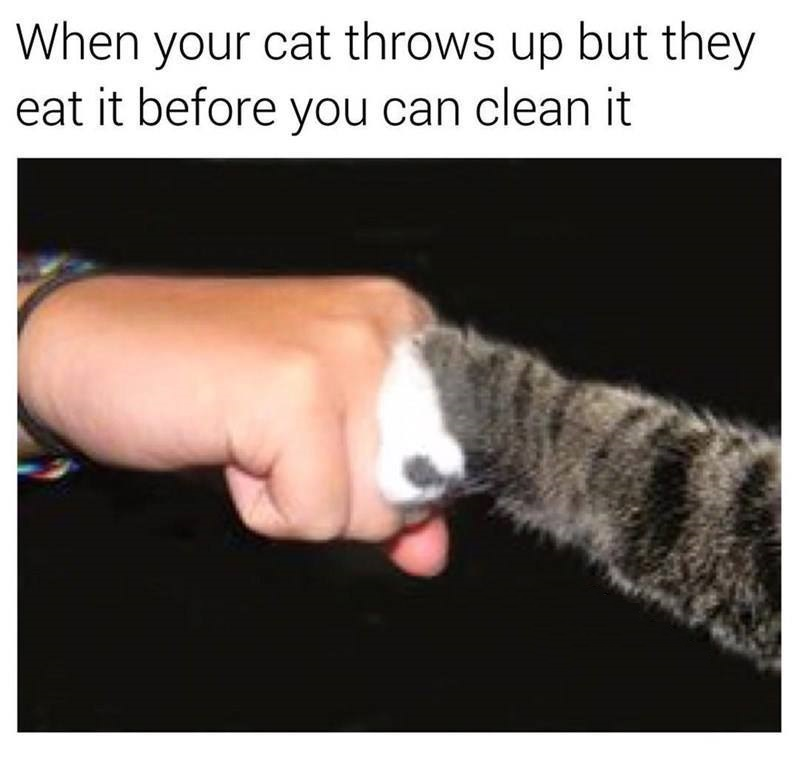 Cat Throws Up
