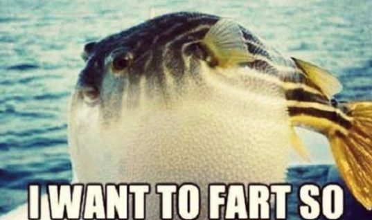 Want To Fart