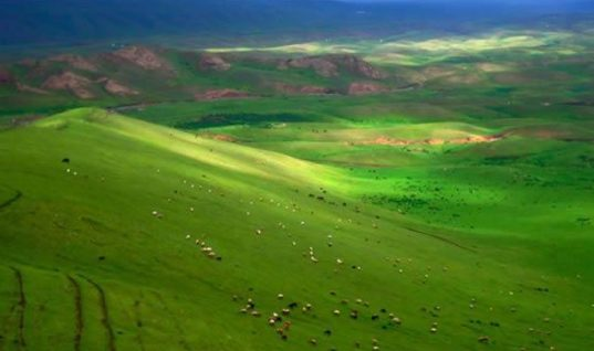 Grand Picture of Tibet Pasture