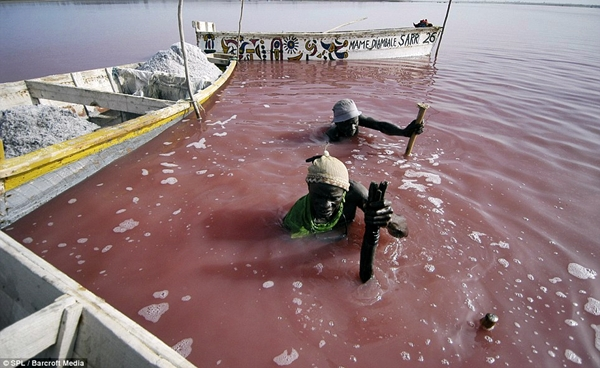 Workers at Lake Retba