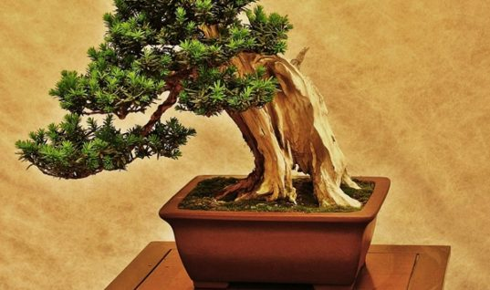 Bonsai: a Mystical Plant