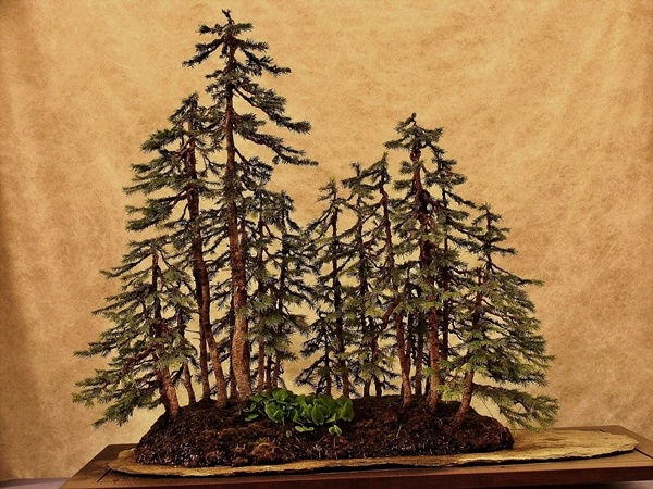 bonsai-pines-family