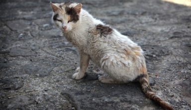 This Sweet Kitten Was Infected With Mange, But Rescuers Soon Gave Her Hope