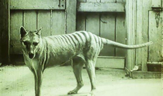 People Thought This Creature Died Decades Ago, But Now It's Being Spotted Everywhere
