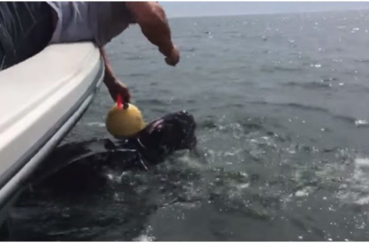 When This Marine Animal Called Out For Help, The Police Launched A Desperate Rescue Mission